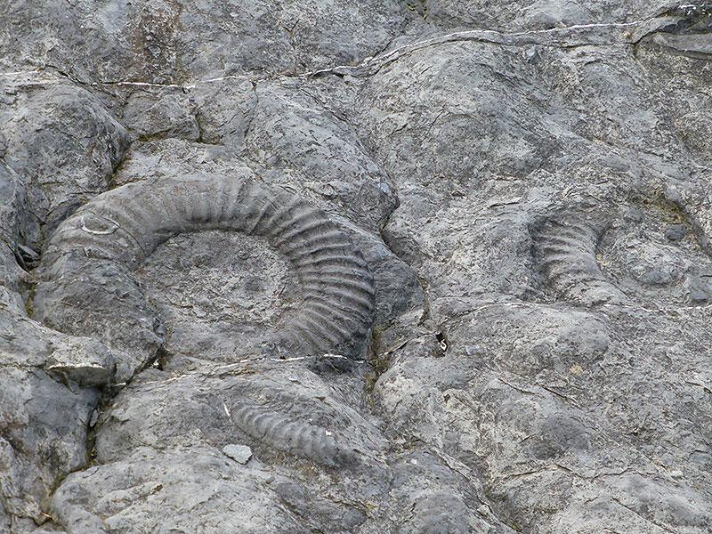 fossiles gorges du verdon